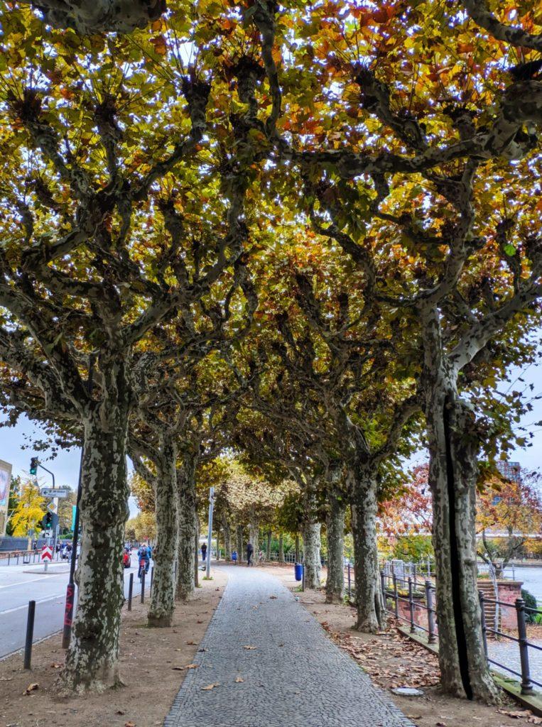 Frankfurt Trees